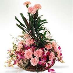 Basket arrangement of 15 pink carnations and 6 purple orchids