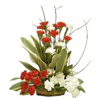 Basket arrangement of 30 red and white carnations with dracaena leaves