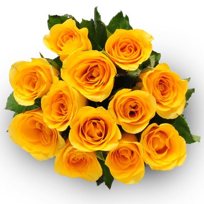Bunch of 12 fresh yellow roses.
