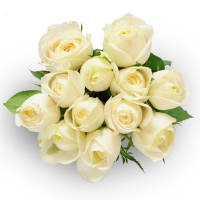 Set of 12 fresh white roses .