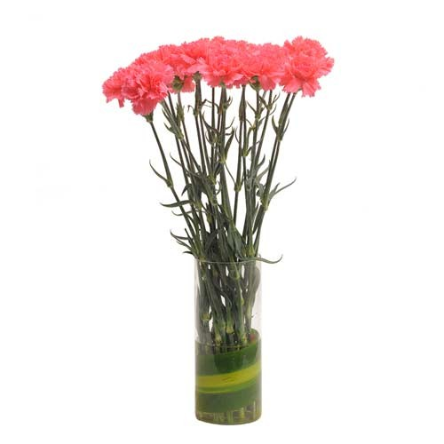Set of 15 pink carnations in a glass vase.