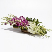 Basket arrangement of white and  purple orchids