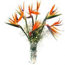 6 exotic stems of birds of  paradise arranged in a glass vase.
