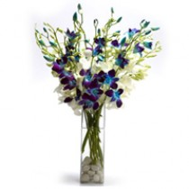Charming arrangement of 15 blue & white orchids in a glass vase