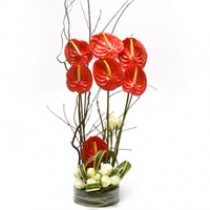 Glass vase arrangement of red anthuriums and white roses.