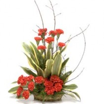 20 red carnations arranged in a basket with dracaena leaves