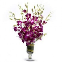 Set of 6 purple orchids in a classic glass vase.