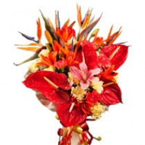 Bunch of anthuriums, birds of paradise, lilies and carnations.