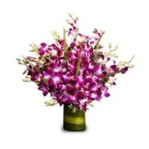 Bunch of 12 purple orchids in a glass vase.